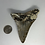 "Thumbnail: 3.95"" Uncleaned Fossil Megalodon Shark Tooth"