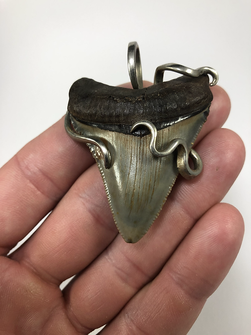 """2.30"""" Silver Forked Wrap Fossil Megalodon Shark Tooth Jewelry"""