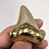 """Thumbnail: 2.38"""" 18K Gold Plated Fossil Chubutensis Shark Tooth"""