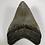 "Thumbnail: 4.30"" Fossil Megalodon Shark Tooth"
