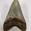 "Thumbnail: 4.49"" Fossil Megalodon Shark Tooth"