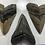 "Thumbnail: Large XL 5""+ Oversize Fossil Megalodon Shark Tooth Refrigerator Magnet Ocean Tee"