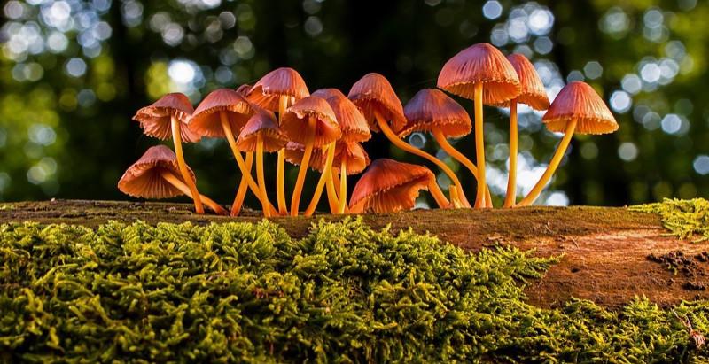 Te pueden sanar, alimentar.... o matar. El mundo fungi.