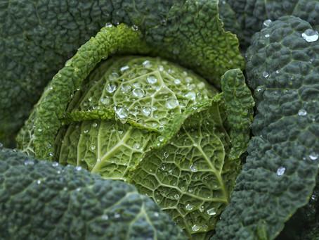 Kale la reina de las hojas verdes