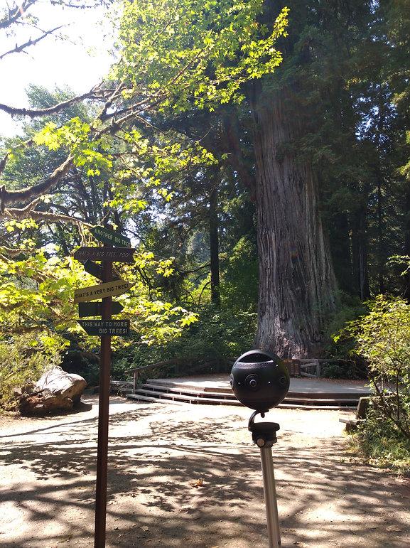 Redwoods 360.jpg