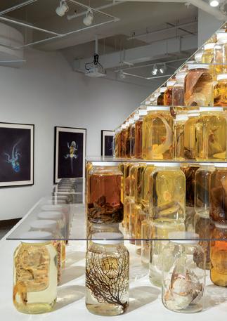 Brandon Ballengée, Rowan University Art Gallery