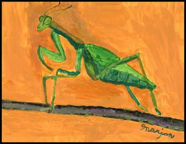 {NEW} Praying Mantis 2019