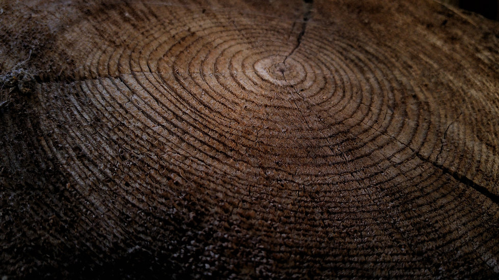 Holz Stamm Jahresringe