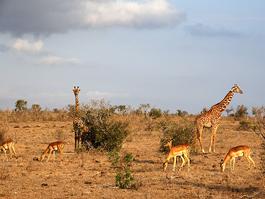 Safary Kenya Tsavo East