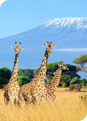 Kenya Kitesurfing School Bahari Dhow Safari Tours