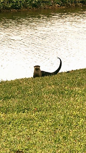 River-Otter-The-Woodlands_edited.jpg