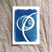 cyanotype 12