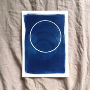 cyanotype 7