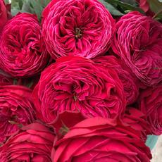 Rose Just More!
