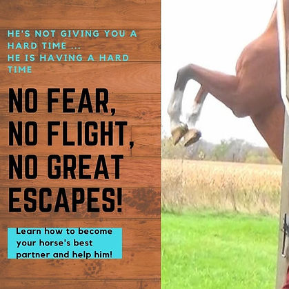 When a horse rears it is escaping not attacking!