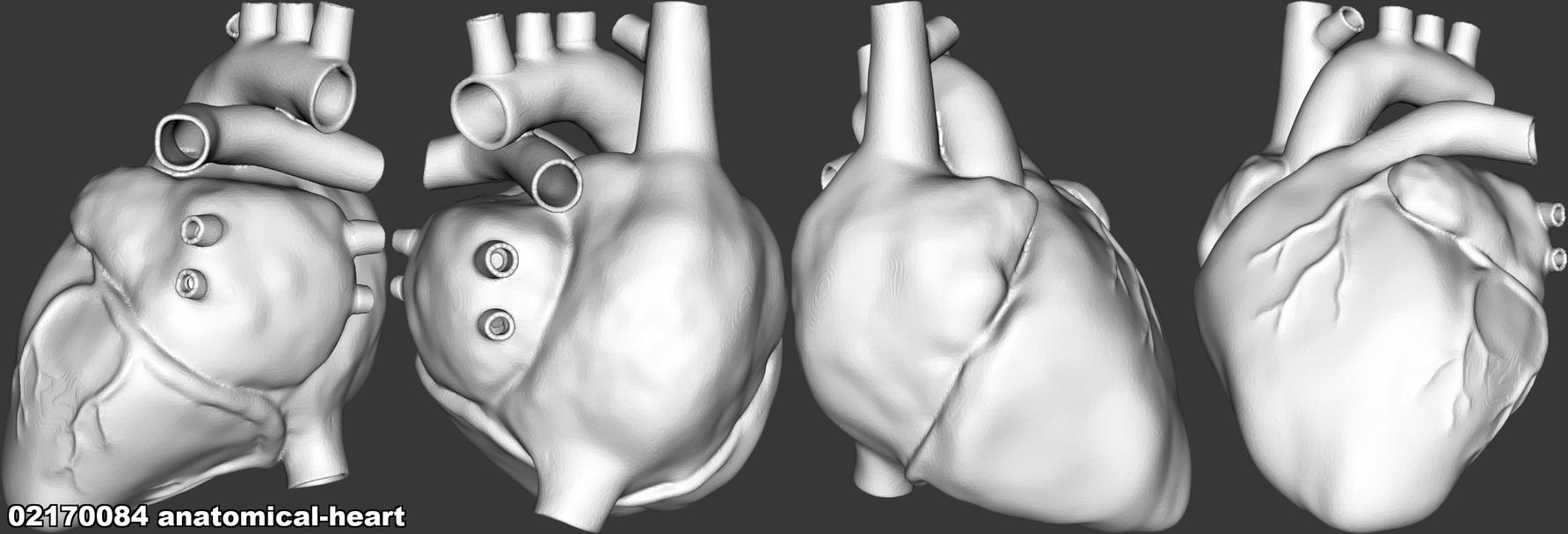 02170084 anatomical-heart.png