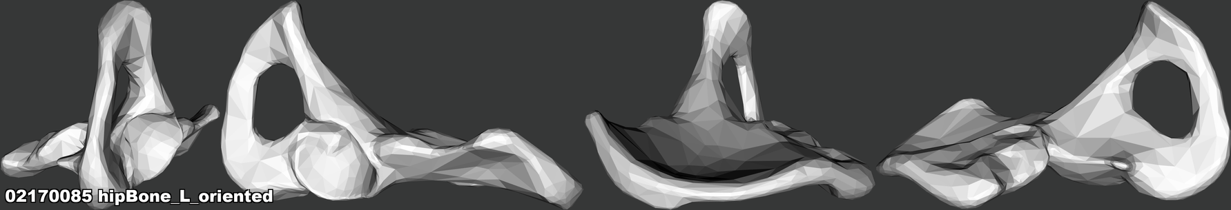02170085 hipBone_L_oriented.png