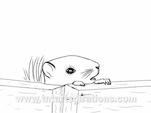 Squirrel - Just Peeking in