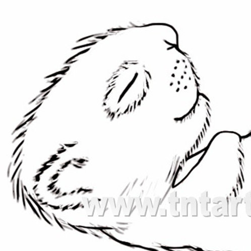 Full Squirrel