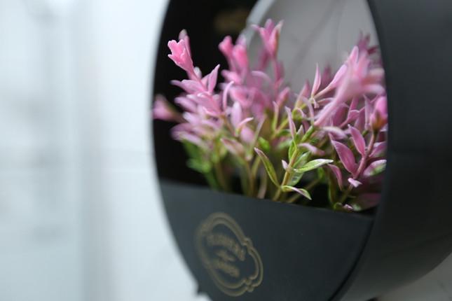 Çiçekler / Flowers