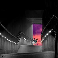 TanyaGawdi-StairwayToLouis.jpg