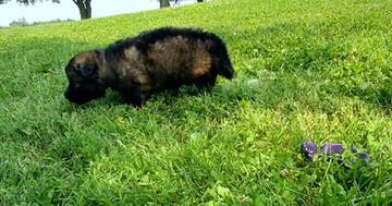 Miss Purple D litter 4 weeks pic 2.jpg