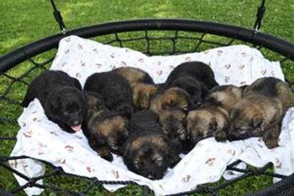My puppies.jpg