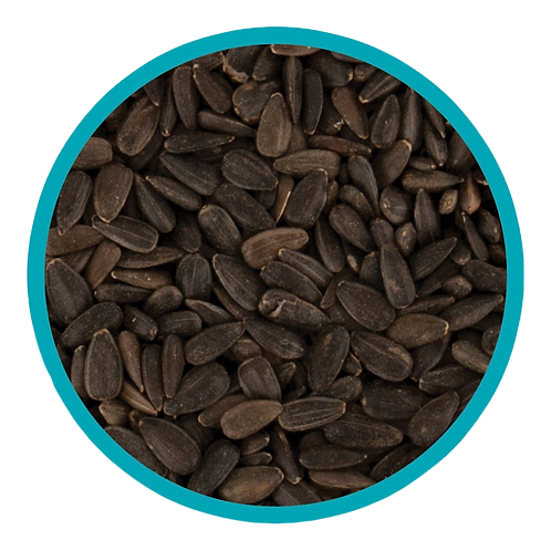 Harrisons Black Sunflower Seeds 1kg