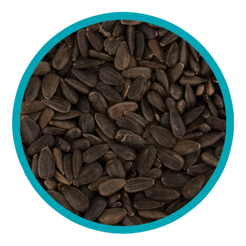 Harrisons Black Sunflower Seeds 1.1kg | Creature Comforts ...