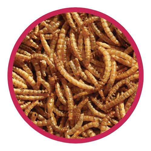Dried Mealworms 500g