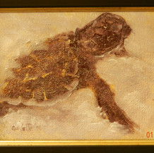 Exiting Turtle | Oil | 6 x 8