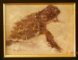 Exiting Turtle   Oil   6 x 8