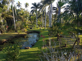 Or you could just walk around the garden and watch birds that are endemic to the island.