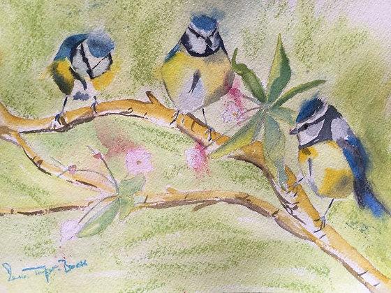 Blue Tits & Cherry Blossom
