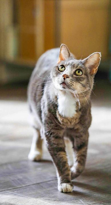 In home cat care