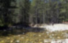 Αρκουδόρεμα