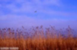 Έβρος Ξάνθη  1999 080.jpg