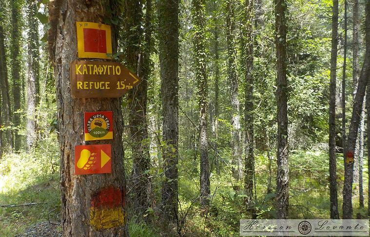Δάσος Μούργκου
