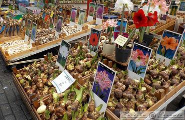 2 Bloemen  Markt