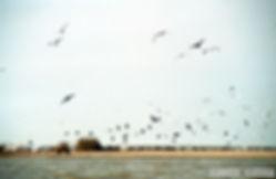 Έβρος Ξάνθη 1999 050.jpg