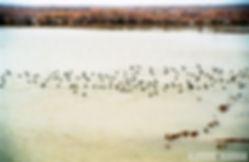 Έβρος Ξάνθη 1999 016.jpg