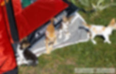 Βάλια Κάλντα camping