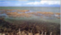 Έβρος 1999 097.jpg