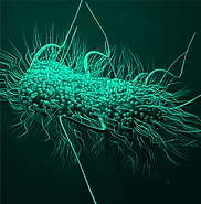 Pathogen green (2).png
