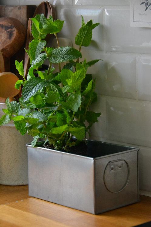 Petite jardinière en zinc