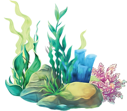 Plants_Rocks.png
