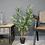 Thumbnail: Artifivial Bamboo Tree