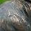 Thumbnail: Large Stag