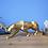 Thumbnail: Leopard