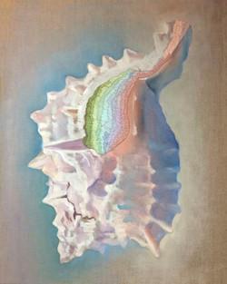 Seashell M-M H